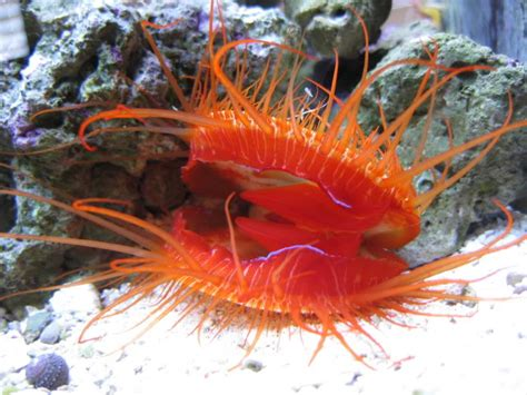 Meet the Electric Disco Scallop, Raver of the Sea