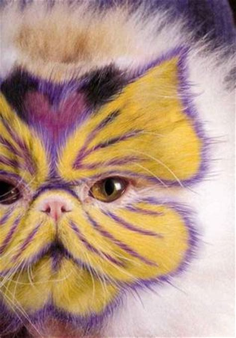 Spray Painted Cats - XciteFun