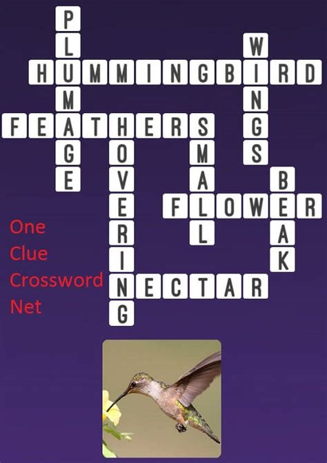 Hummingbird - Get Answers for One Clue Crossword Now