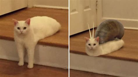 We can't tell if these cat memes are really funny or just