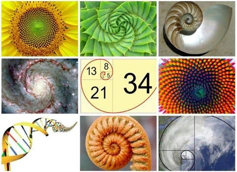 Learn About The Magic Of Fibonacci In Nature - The Math Of God