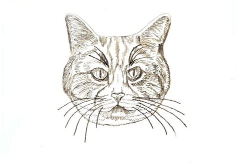 Learn How To Draw Four Different Cats - Traditional