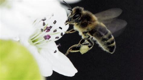 What's Killing the Honey Bees? | The Weather Channel