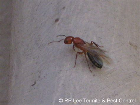 RP Lee Termite & Pest Control - The Bryan-College Station