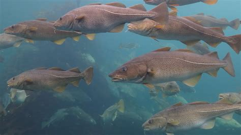 Vanishing Fish: An interview with Dr