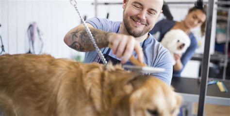 Pampered pets: the rise of dog grooming - Independent