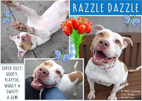 Must Love Dogs - Saving NYC Dogs - *** SAFE 02/17/18