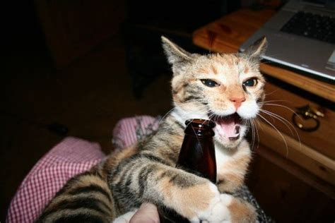26 Cats Who LOVE Beer - Page 9 of 26 - Beer