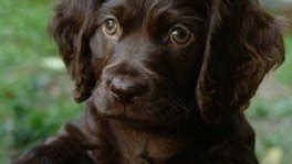 Home - Puppies For Sale Local Breeders