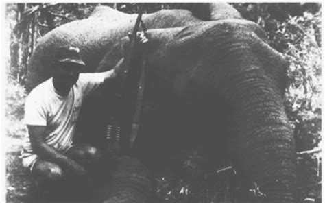 A Day After The Rogue Indian Elephant   AfricaHunting