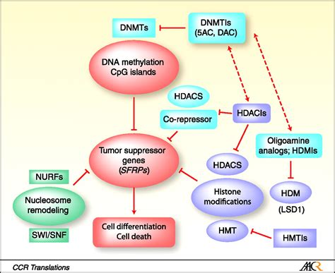 Targeting Histone Demethylases in Cancer Therapy