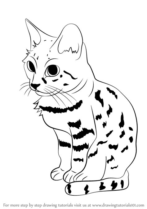 Step by Step How to Draw a Black-Footed Cat