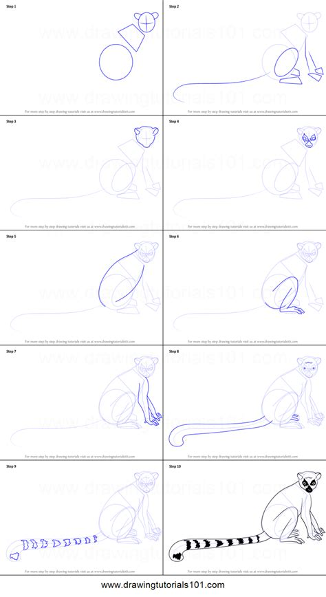 How to Draw a Ring-Tailed Lemur printable step by step